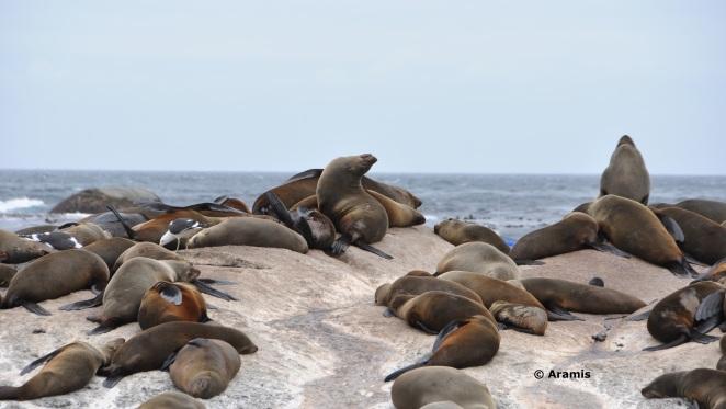 Seal Island_Cape Town