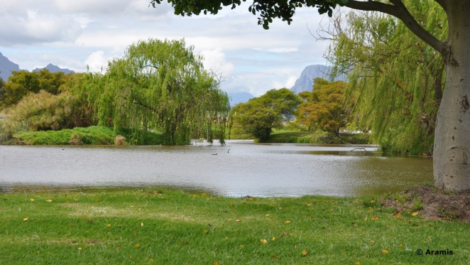 Neethlingshof_Stellenbosch_laghetto