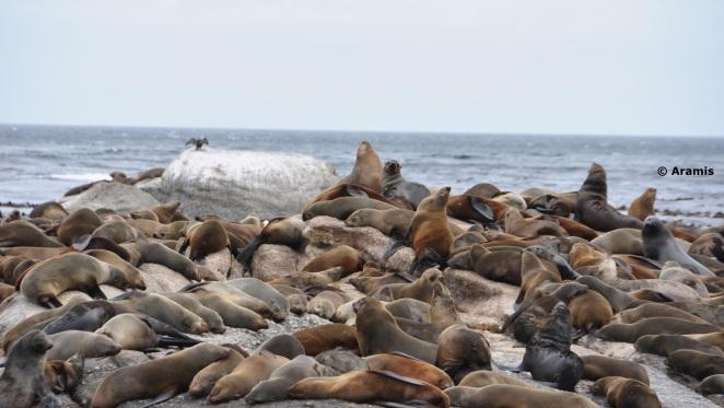 Cape Town_Seal Island2
