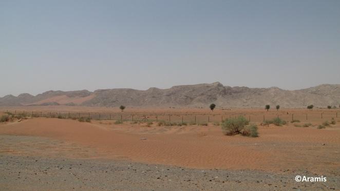 Emirati Arabi_1