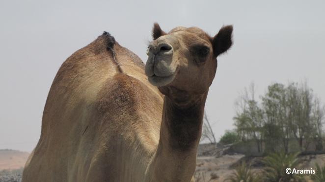 Emirati Arabi_2