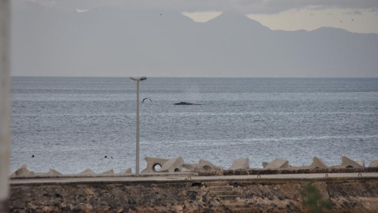 Muizenberg_balena