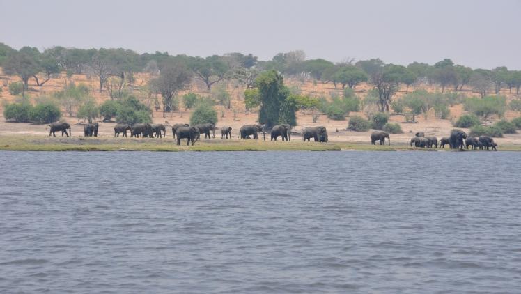 Elefanti_Parco_Chobe_2