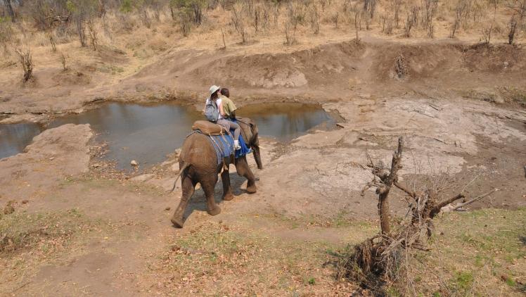 safari_elefante_Zimbabwe_2