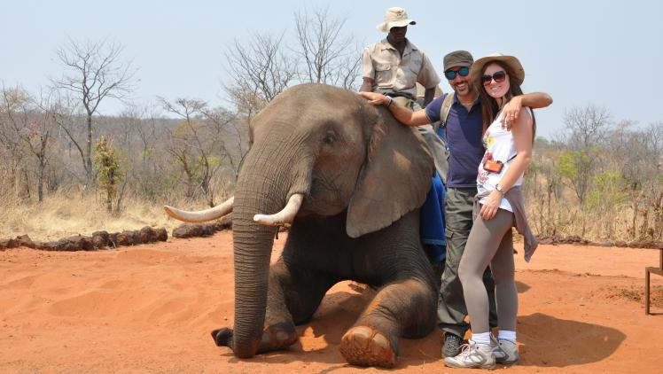 safari_elefante_Zimbabwe_3