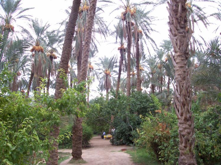 Oasi_Degache_Tunisia