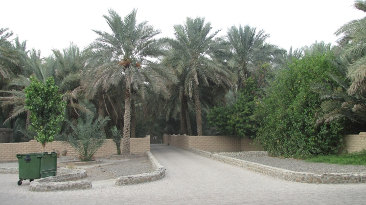 Oasi_Al Ain