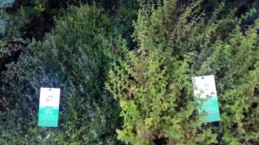 Giardino della Minerva 2