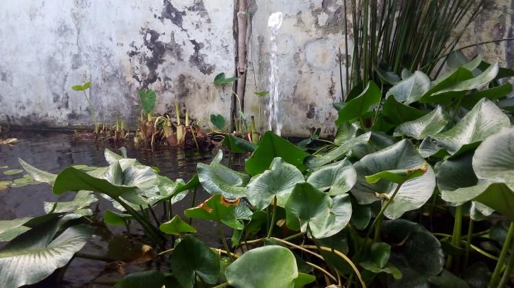 Giardino della Minerva 6